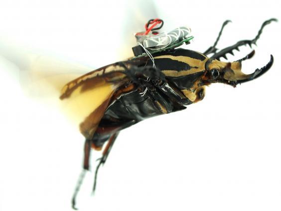 13-Cyborg-Beetle2.jpg