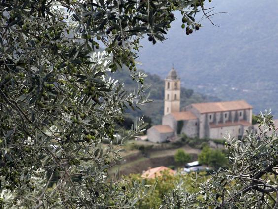 olive-oil-afp-getty.jpg