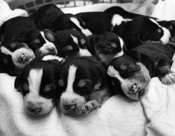 sleeping-puppies.jpg