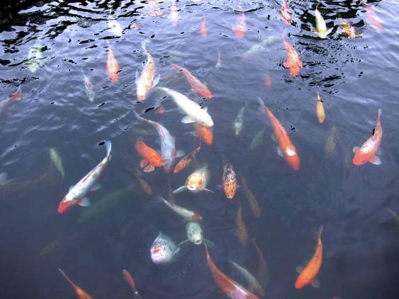 ozzi-fish.jpg
