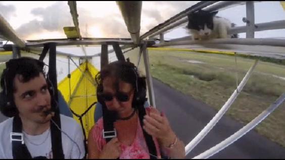 catplane2.jpg