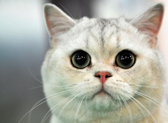 Cat-Getty-2.jpg