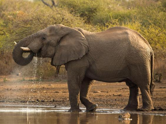 pg-8-kenya-elephants-2-getty.jpg