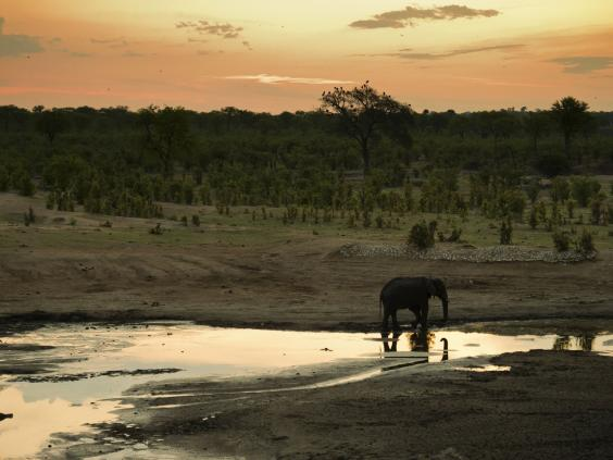 Hwange-National-Park.jpg