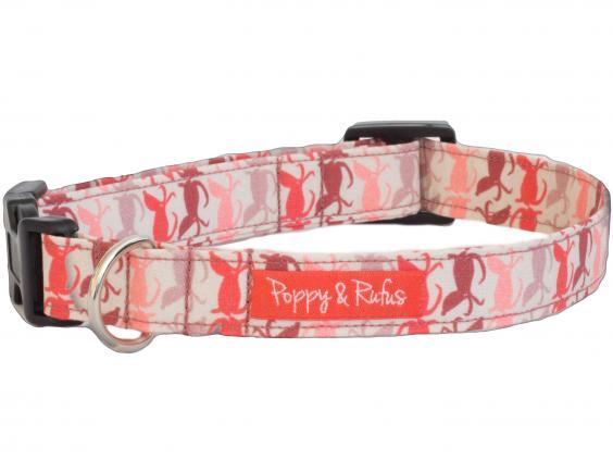 Bobby Dog Collars