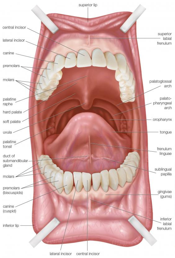 pallet mouth 1