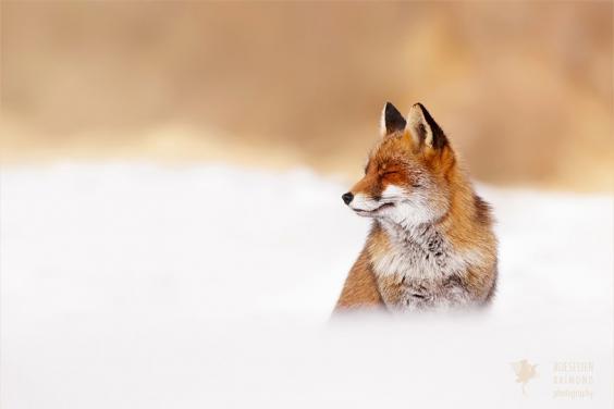 zen-foxes-roeselien-raimond-10__880.jpg