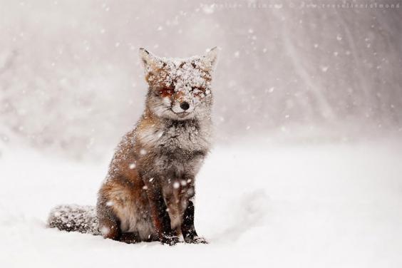 zen-foxes-roeselien-raimond-4__880.jpg