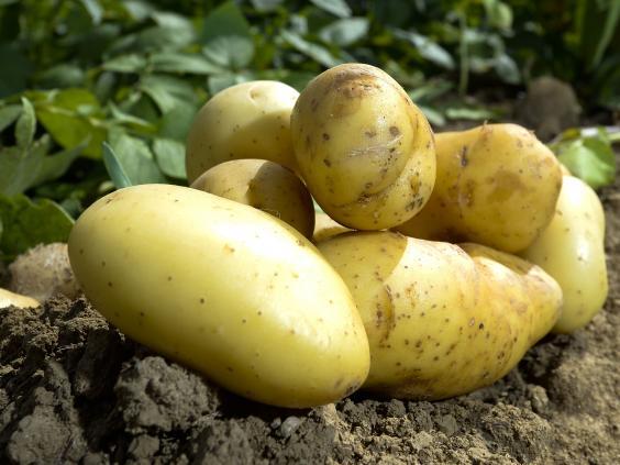 Potatoes-Rex.jpg
