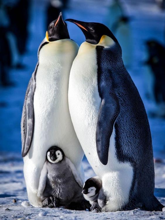 Snow-Chick-BBC.jpg