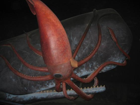 giant-squid-whale.jpg