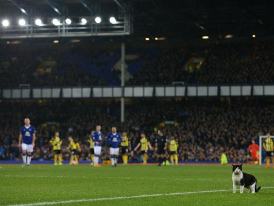 Cat-Everton.jpg