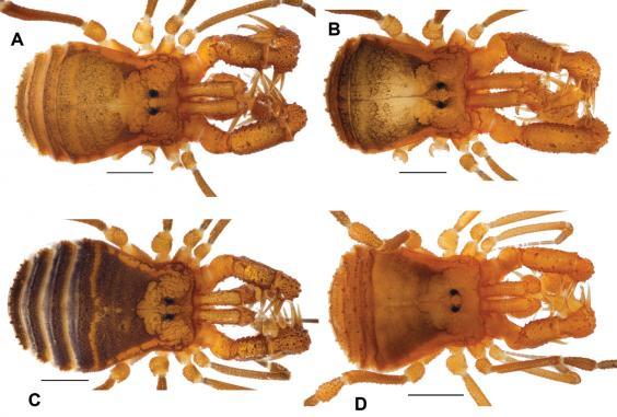 cryptomaster-behemoth-spider-3.png