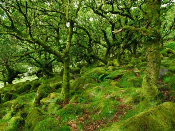 wistmans-visit-dartmoor.jpg