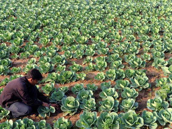 17-cabbage-patch-afpget.jpg