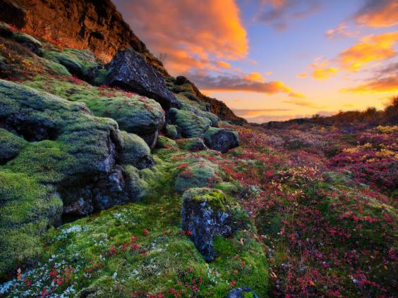3.-Thingvellir-national-park-in-the-Golden-circle-can-become-extremely-colorful-during-Autumn.jpg