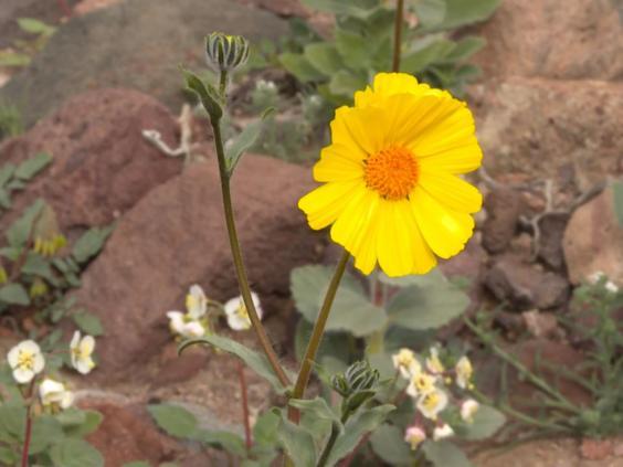 Death-Valley-Natural-History-Association-National-Park-Service3.jpg