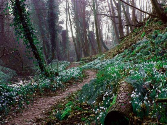 scottish-snowdrop-festival.jpg