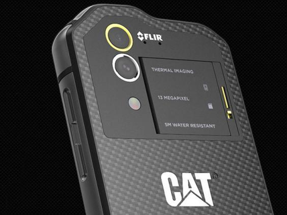 CATs6602.jpg