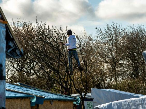 Calais-tree.jpg