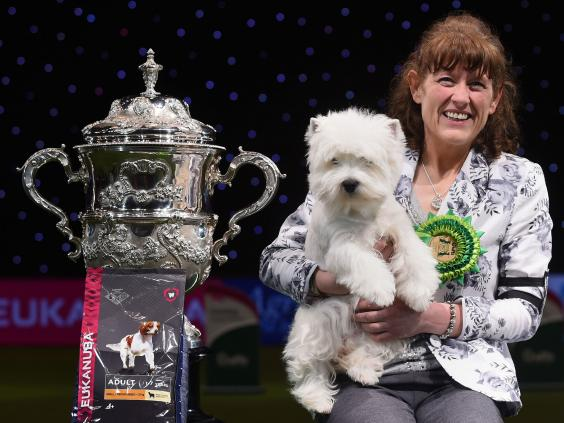 crufts-2016-west-highland-terrier-devon-2.jpg