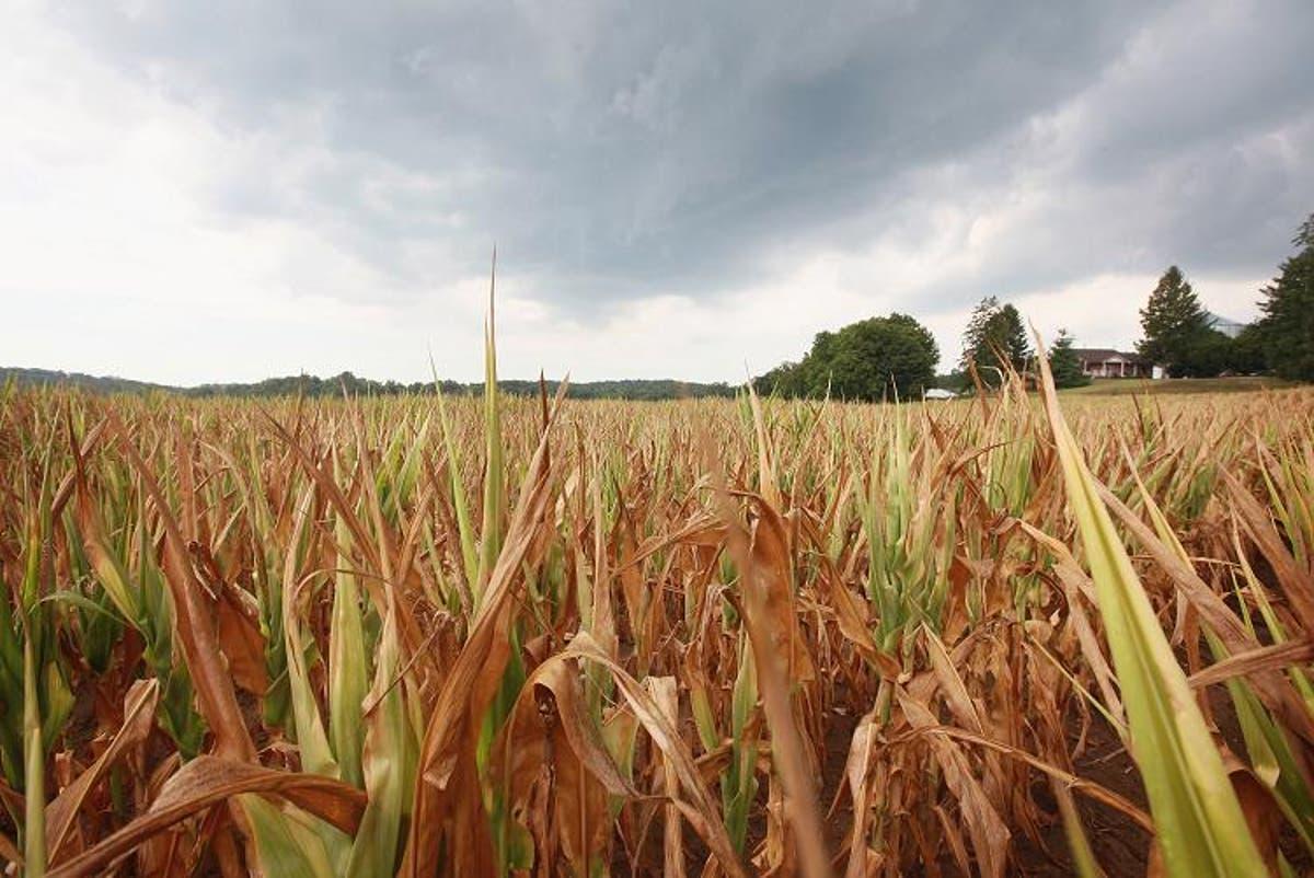 Four people found dead inside SUV in Wisconsin cornfield in suspected mass killing