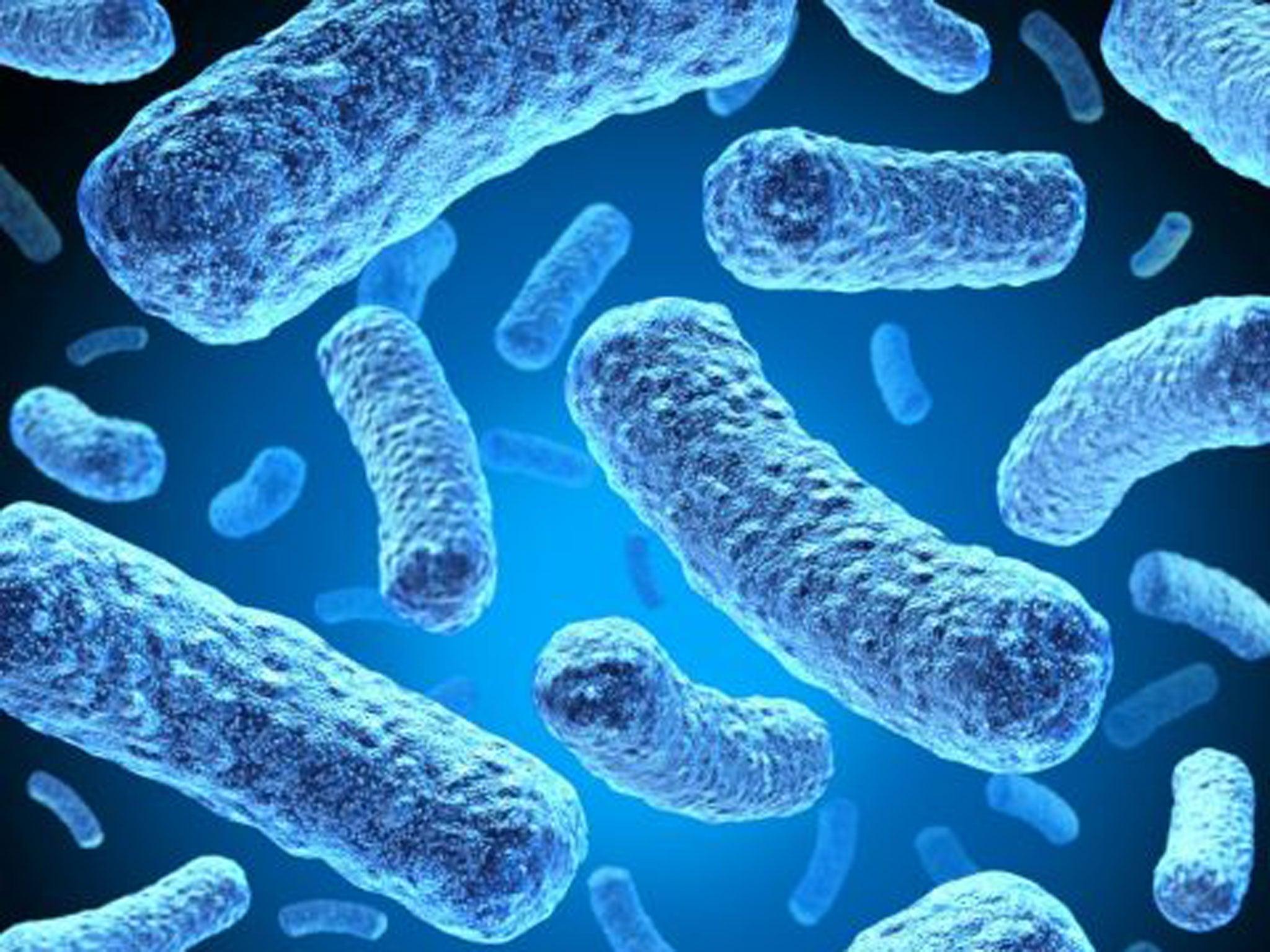 Фото та назви бактерій 11 фотография