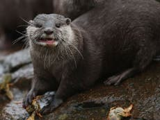 Otters, chimps and lions to receive Covid shot at Maryland zoo