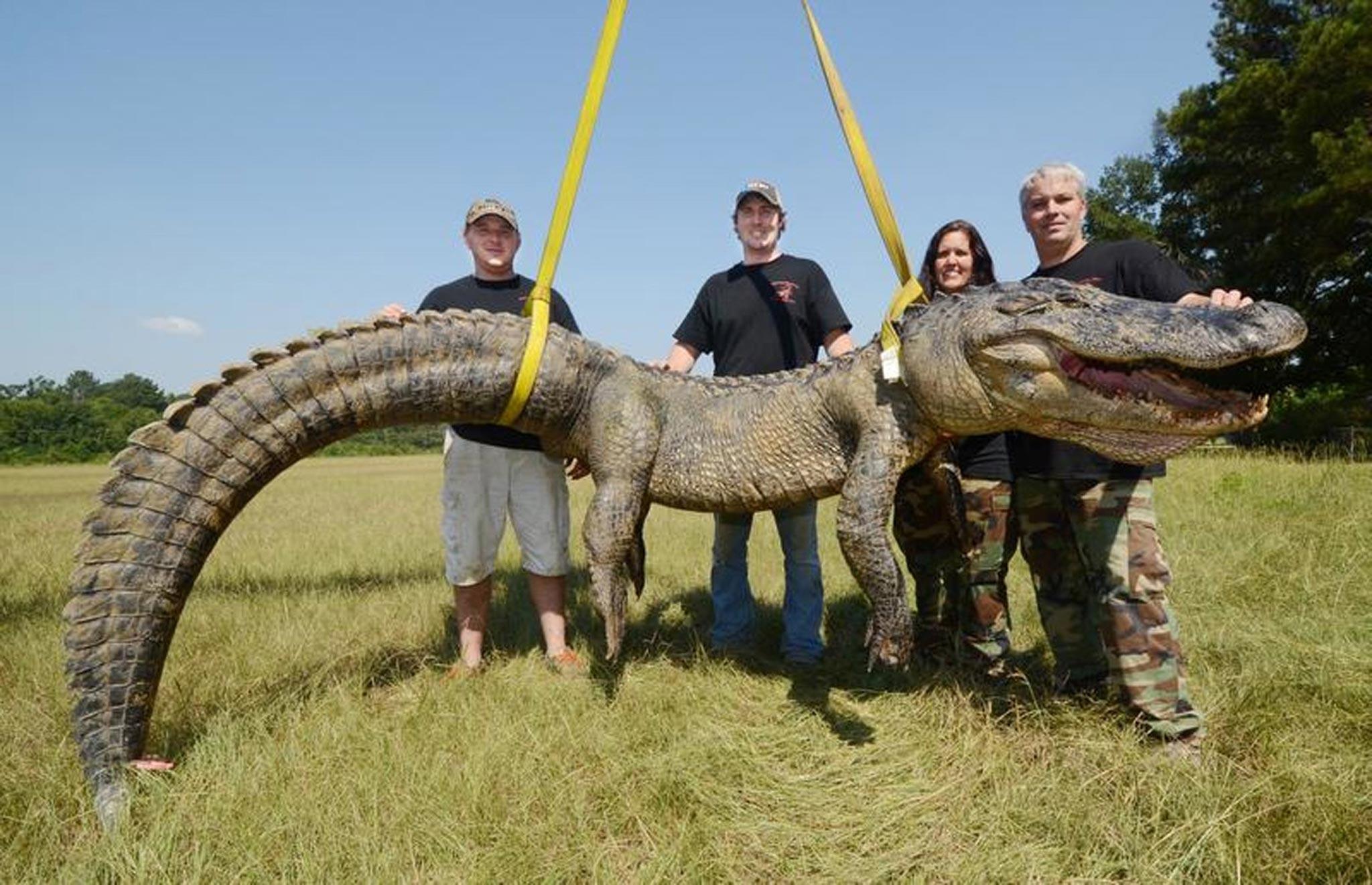 US alligator hunters break record for biggest beast ever ...