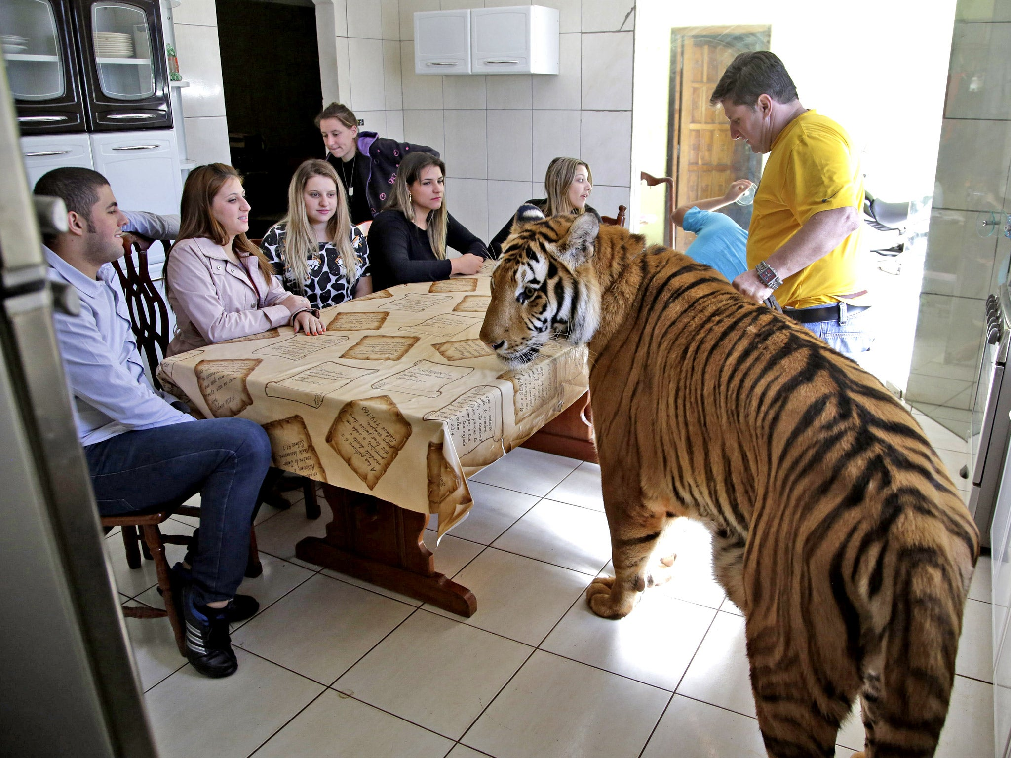 the brazilian family that shares its home with nine tigers