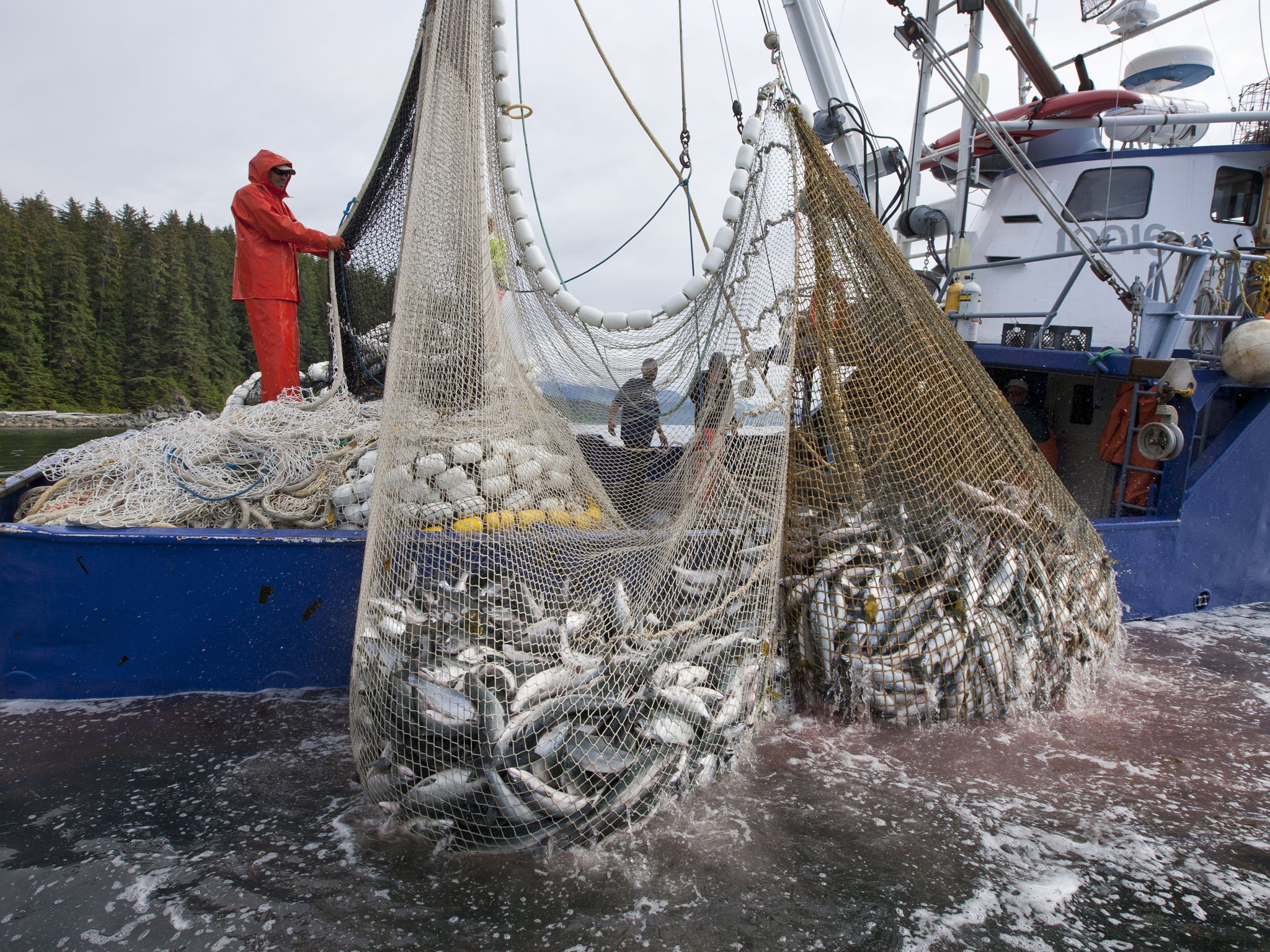 Tesco accused of selling 39 dirty tuna 39 by top chef hugh for Seine net fishing