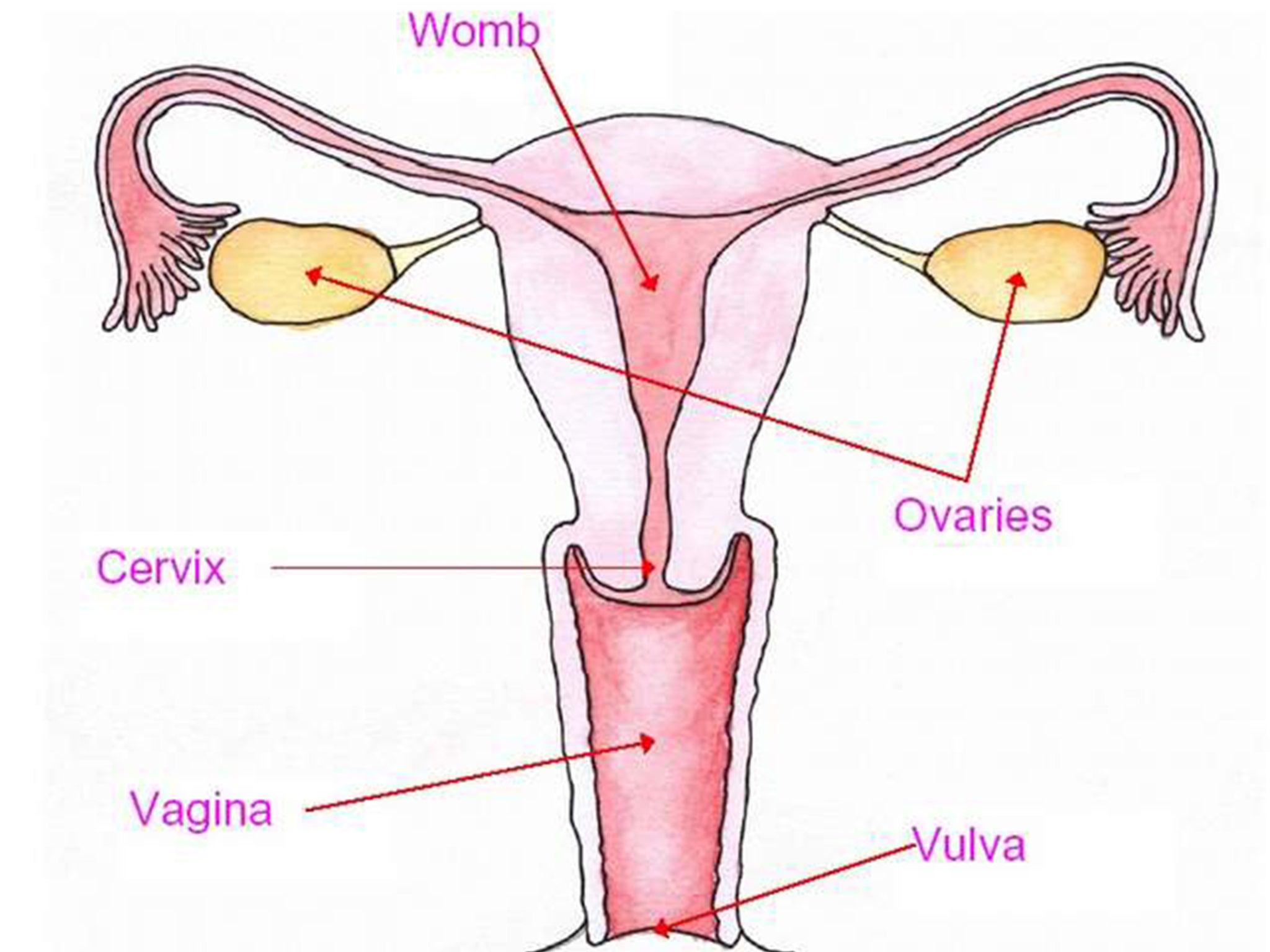 Фотографии вагин и только вагин 2 фотография