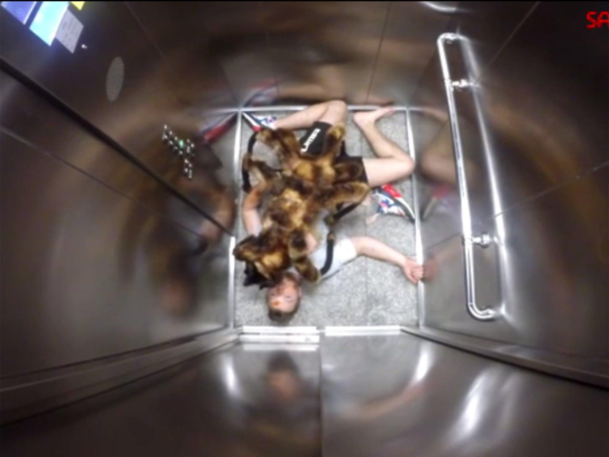 Лифт для кошки