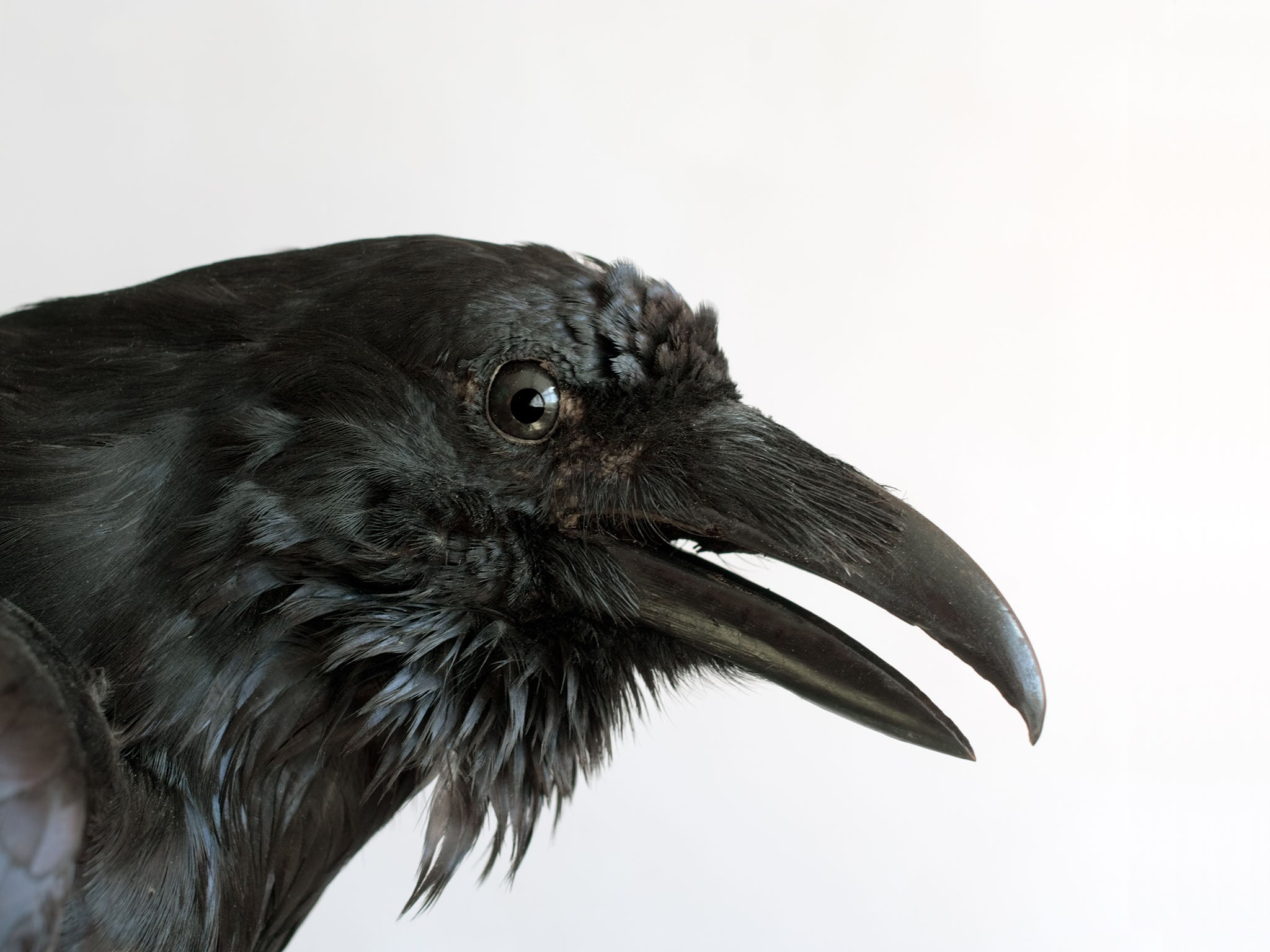"""the representation of poes own crisis in edgar allan poes the raven Creating the melancholic tone in """"the raven"""" edgar allan poe's """"the raven,""""  representing poe's own introverted crisis of  what does this change represent."""