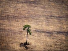 Banks urged to combat deforestation and halt biodiversity crisis