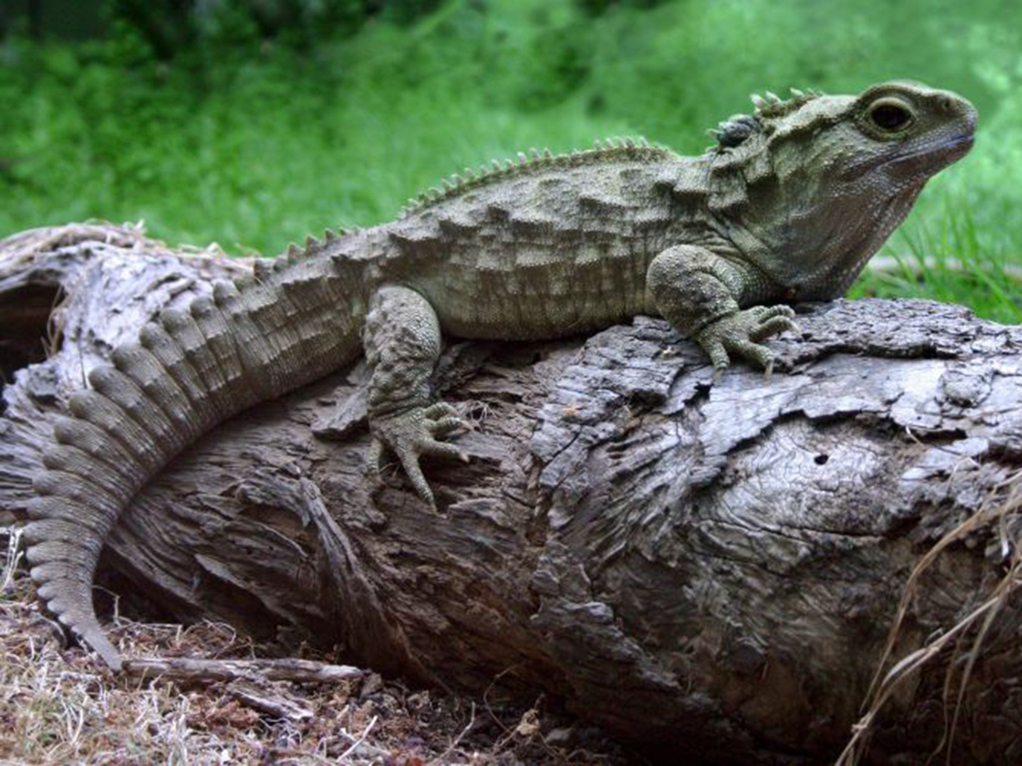 reptile dating site