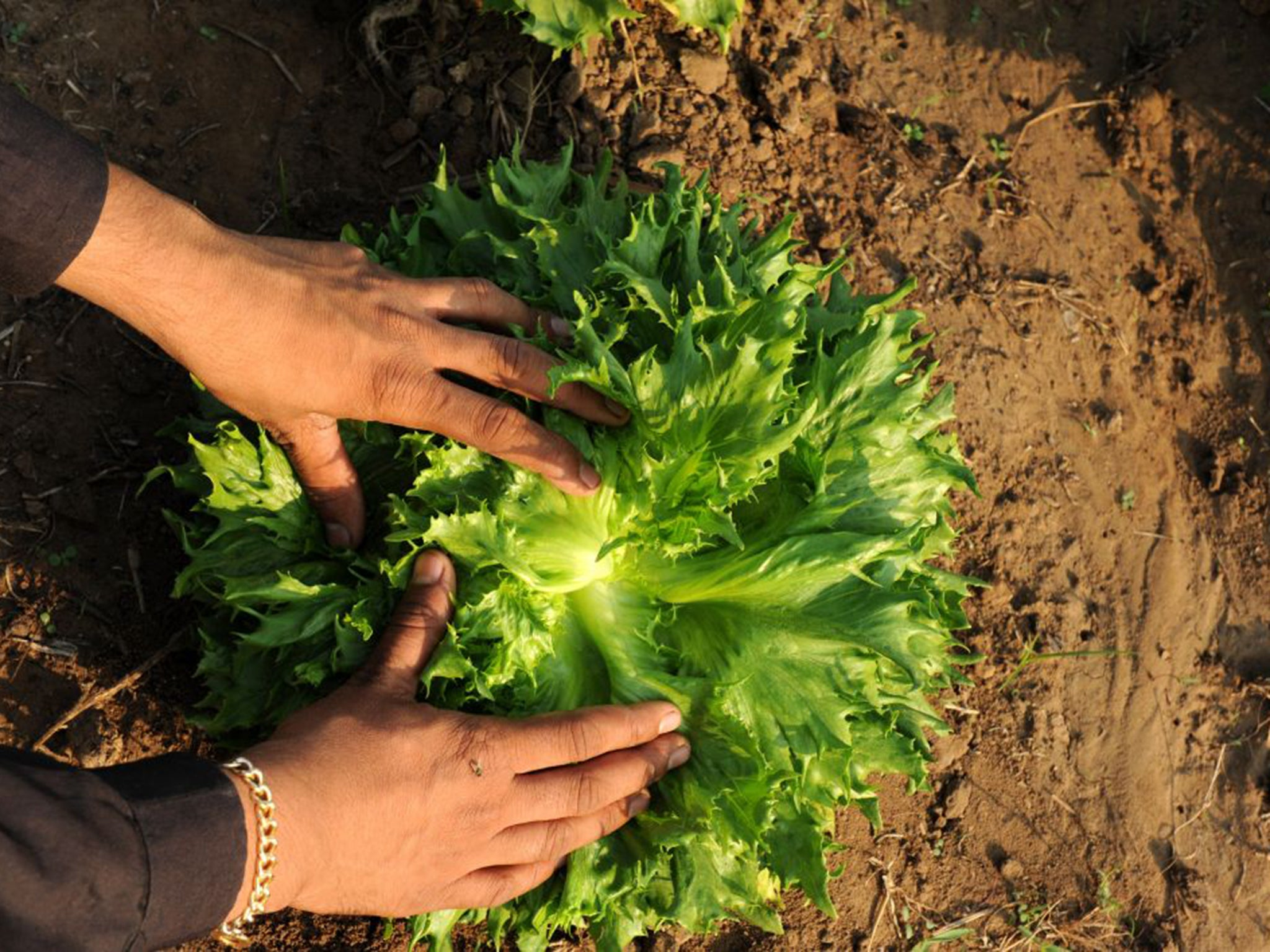Organic farming 'could be key to feeding the world as ...