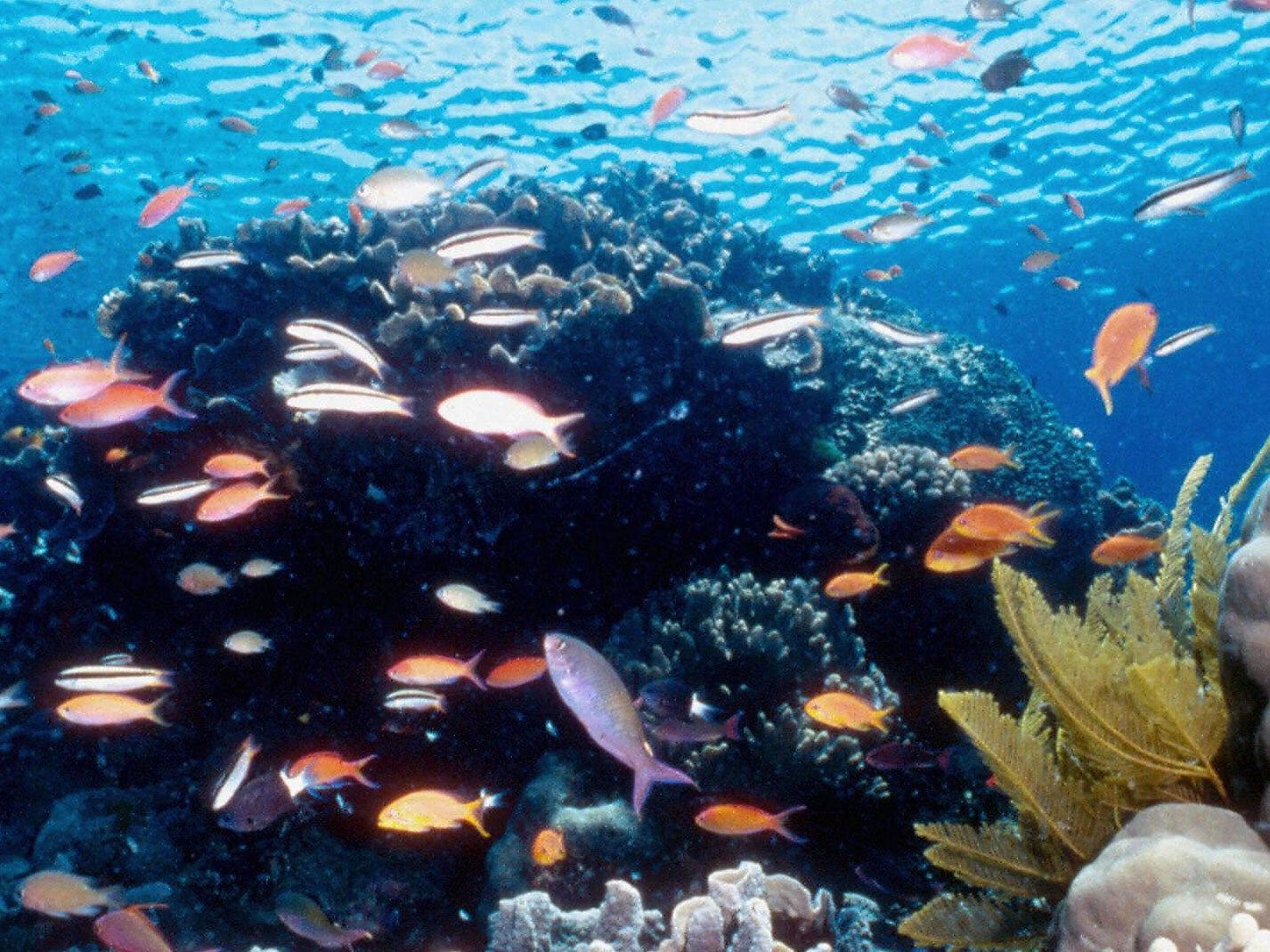 coral reefs our disappearing beauty Coral reefs, our disappearing beauty coral reefs coral reefs thailand vs indonesia among the hidden--reader's report changes in teenage lifestyle: indonesia.