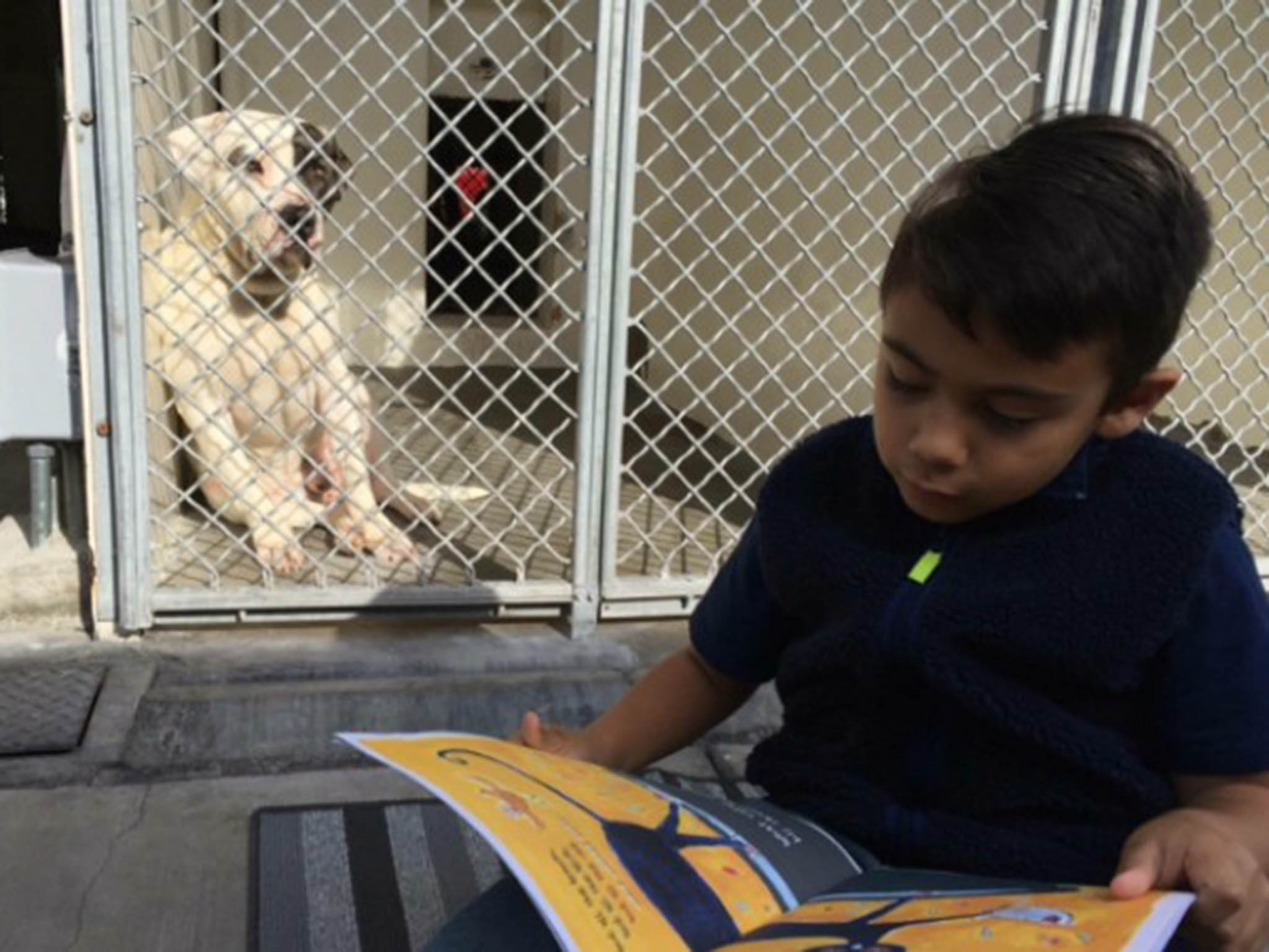 Boy with autism reads to rescue dogs to help them find a new home