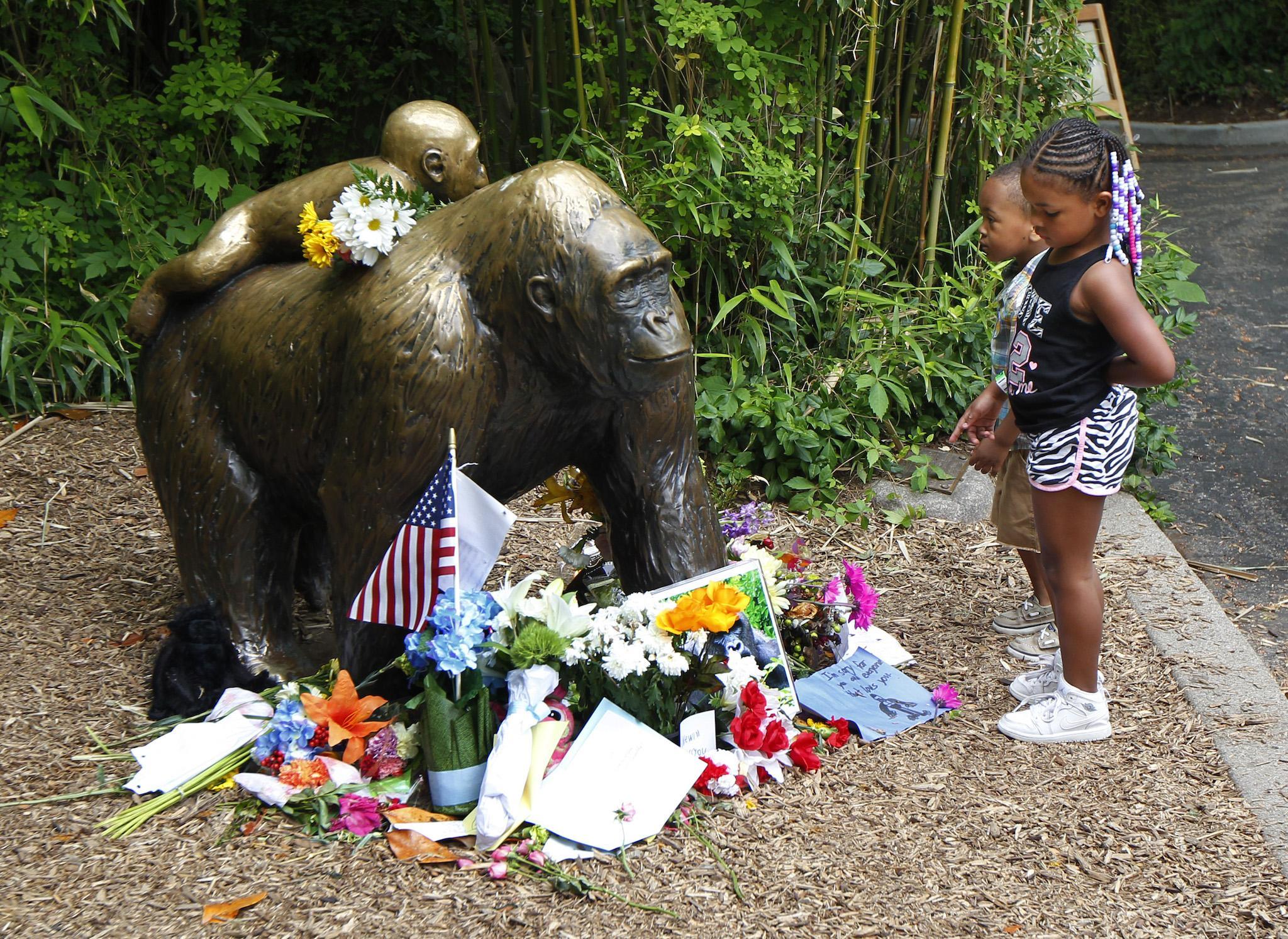 Harambe Stop Making Memes Of Our Dead Gorilla Cincinnati