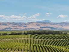 Why we need to give New Zealand sauvignon blanc a second chance