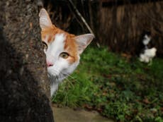 Croydon cat killer: How the gruesome death of a pet called Ukiyo sparked three years of hype, headlines and panic
