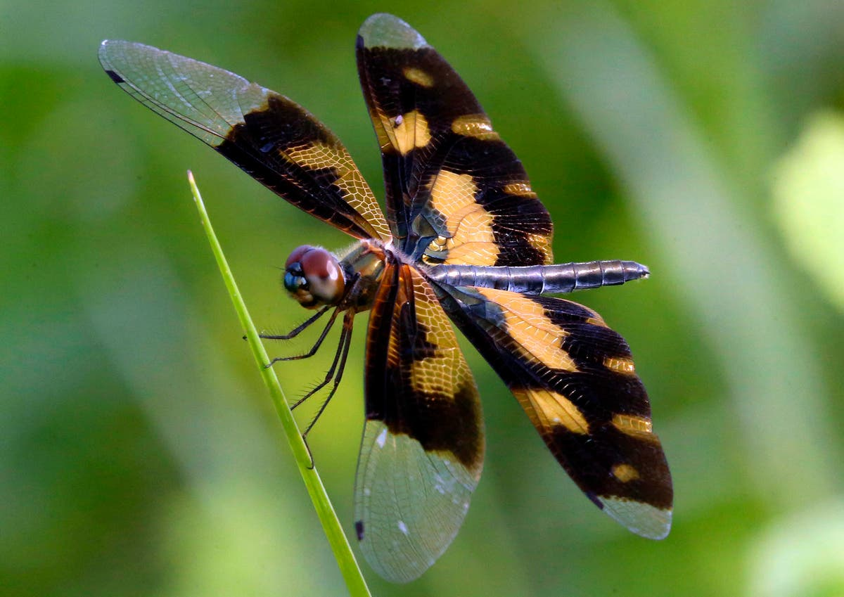 More than 100 nations sign key pledge to protect biodiversity