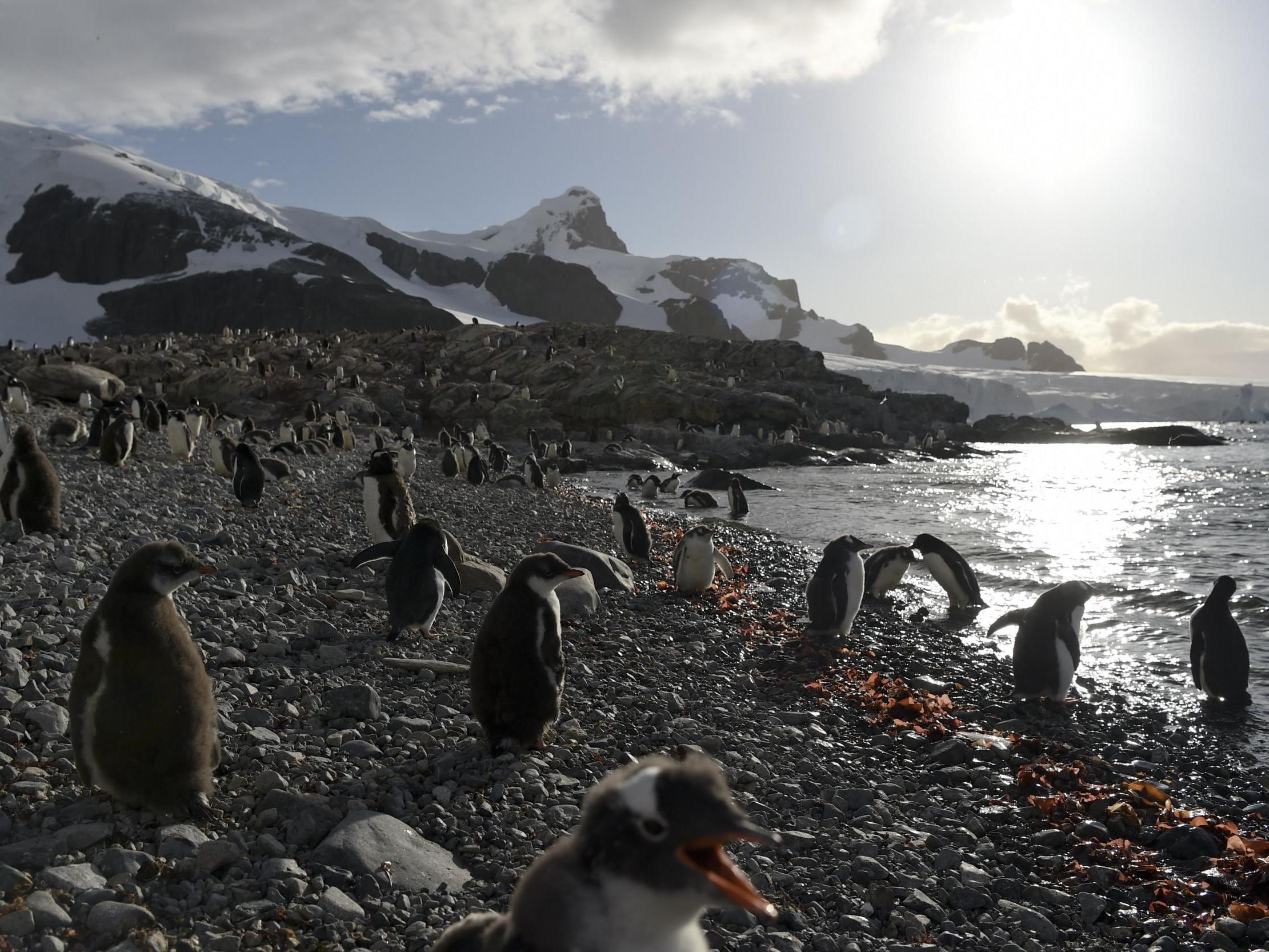 Krill fishing industry backs massive Antarctic ocean sanctuary to protect penguins, seals and whales: Move comes after 1.7 million people back campaign to create largest ever wildlife sanctuary in pristine waters around polar region.