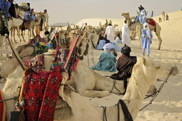 Camels near Timbuktu, Mali