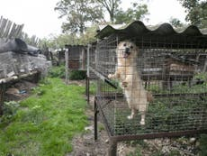 Dogs and puppies found 'neglected and starving' in cages at Poland fur farm