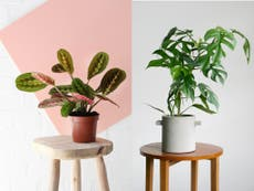 7 best house plants that will boost your mood and space