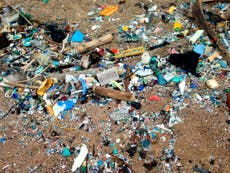 Microplastics now discoverable in human organs due to innovative technique