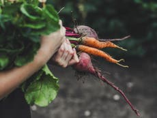Organic September: Could farming be a solution to the climate crisis?