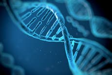 American scientists have finally finished drafting the human genome